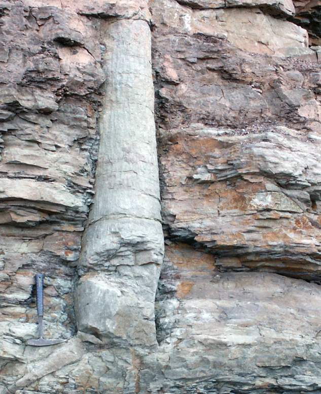 POLYSTRATE FOSSILS PDF DOWNLOAD